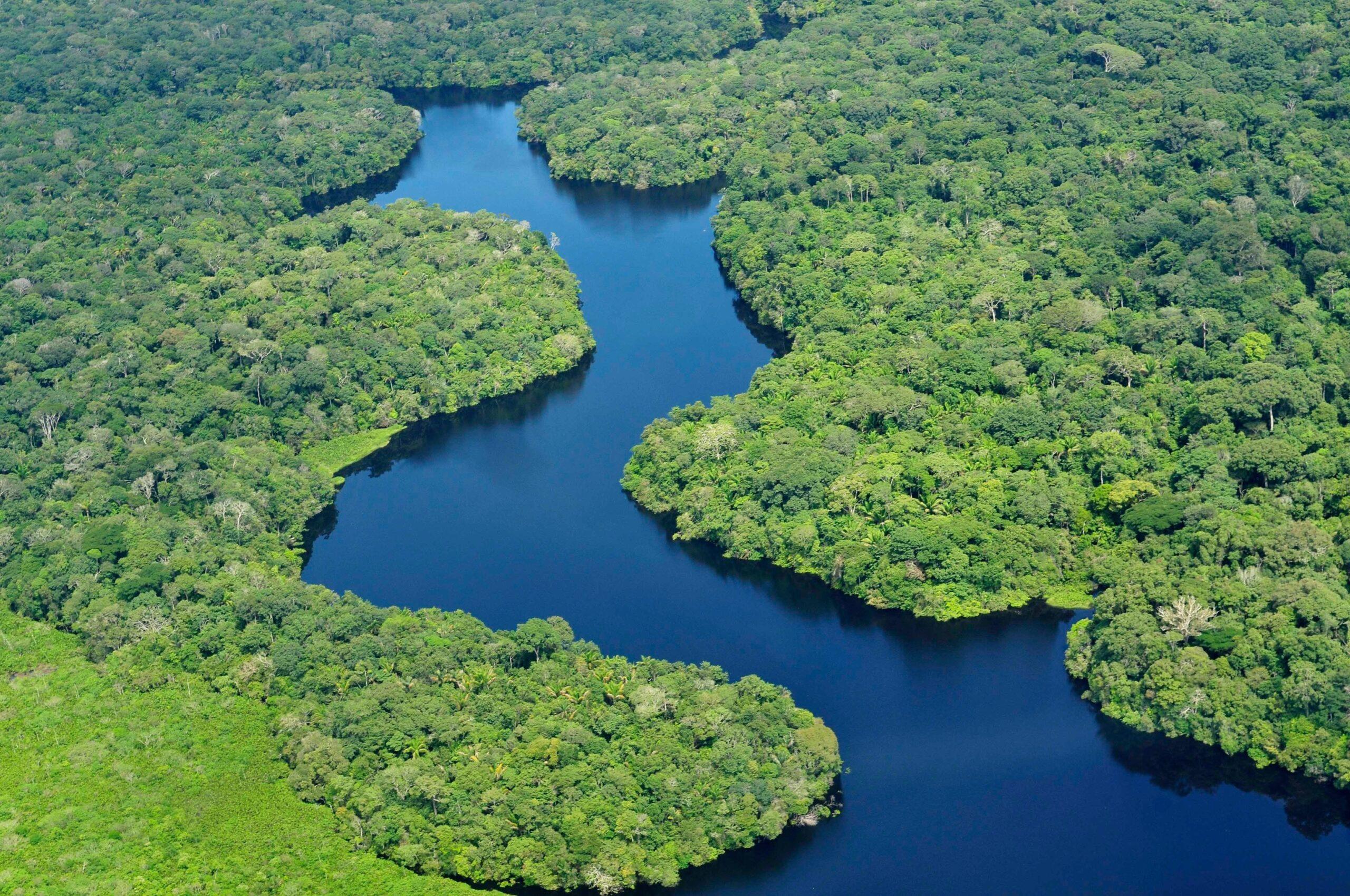 Rainfores